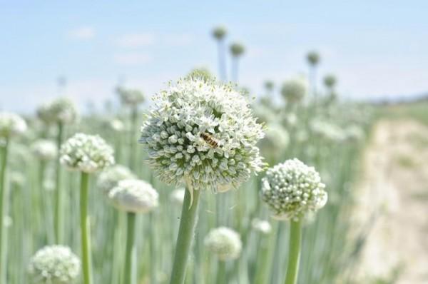 uprawa-warzyw1