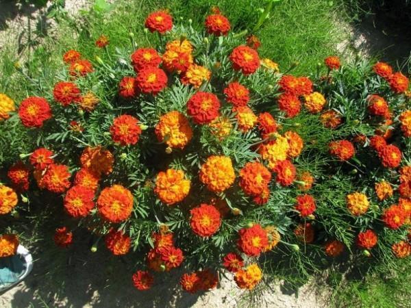 uprawa-kwiatow1