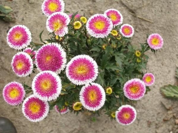 uprawa-kwiatow2