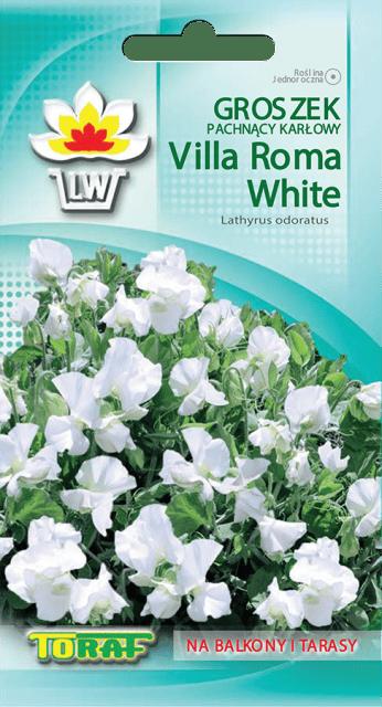 groszek-pachnacy-white1