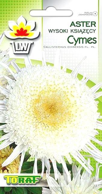 aster-cymes1