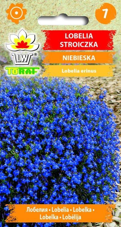 lobelia-niebieska