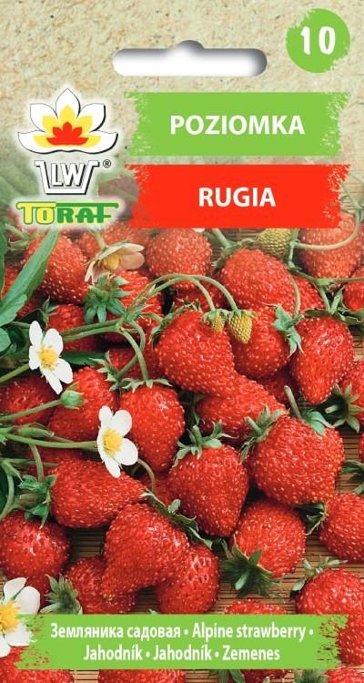 poziomka rugia-LW-342-16_F_compressed