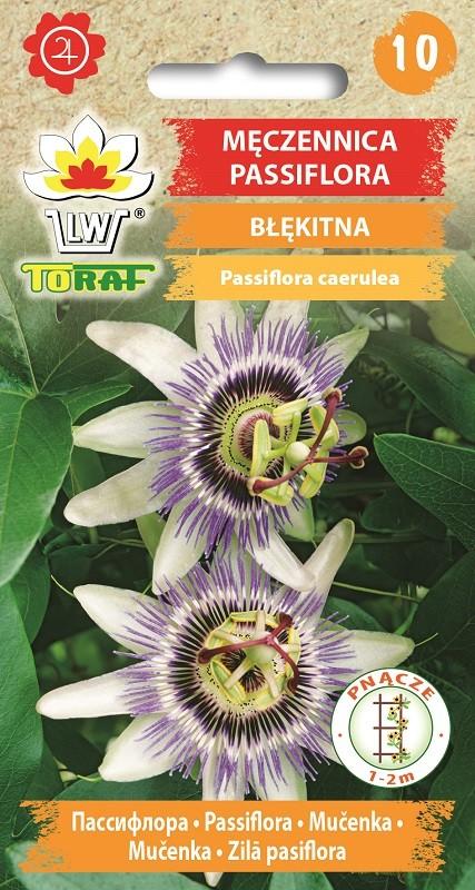 Meczennica,-Passiflora---Niebieska