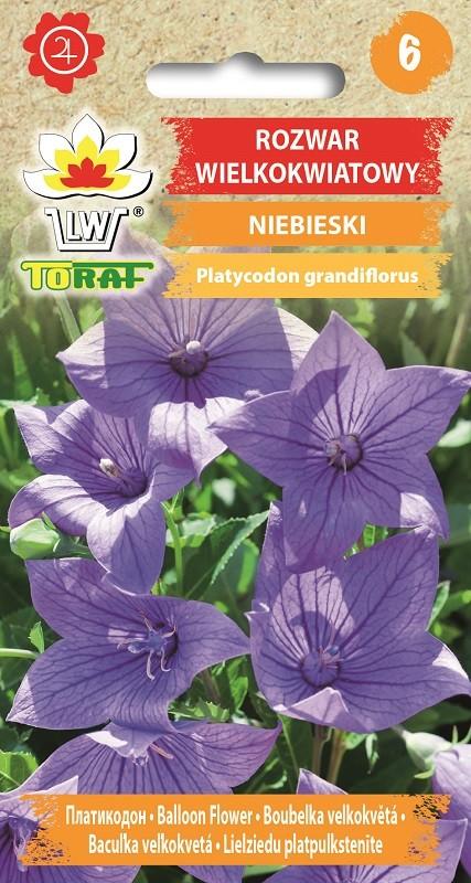 Rozwar-Platykodon-Niebieski