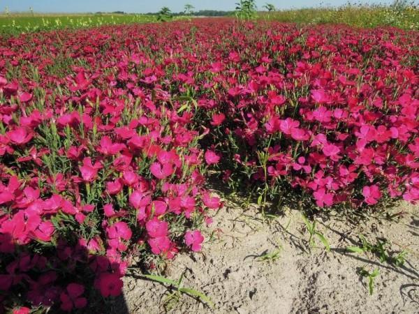 uprawa kwiatów 2