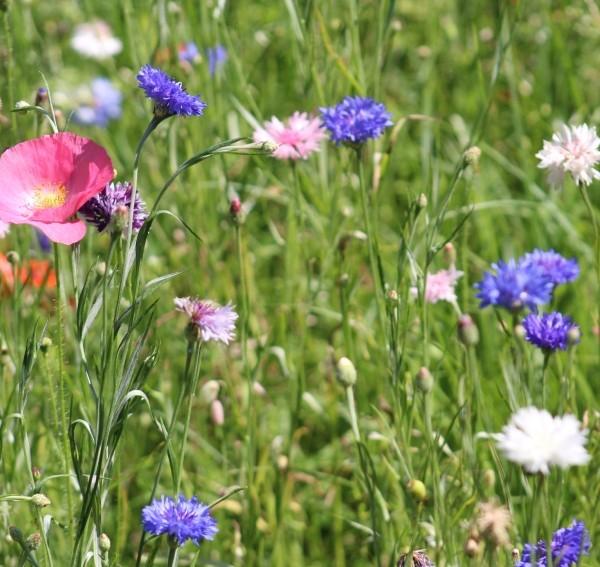 kwiatowa-laka-5