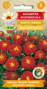 Aksamitka-rozpierzchla-Bonita-Carmen-1
