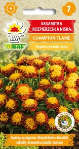 Aksamitka rozpierzchła Champion Flame