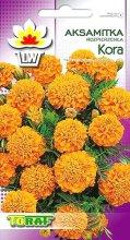 aksamitka kora pomaranczowa