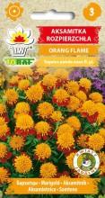 2008_Aksamitka Rozpierzchła Orange Flame