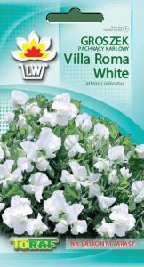 Groszek pachnący Villa Roma White