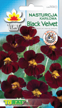 Nasturcja karłowa Black Velvet