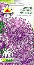 Aster igiełkowy wysoki Wioletta fioletowy