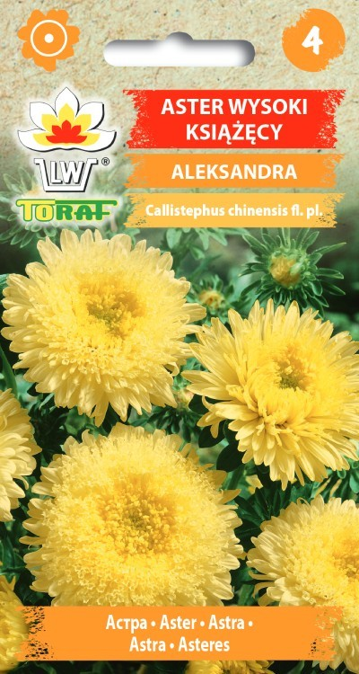 aster-aleksandra