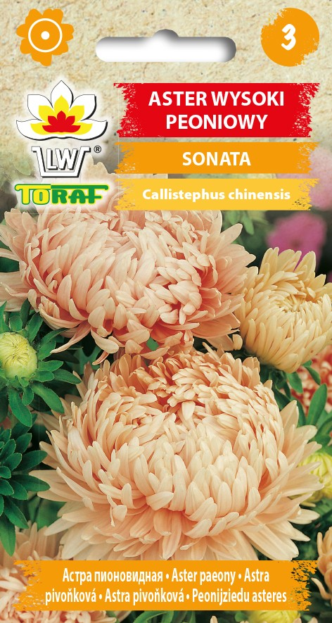 aster-sonata