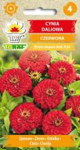 cynia-czerwona