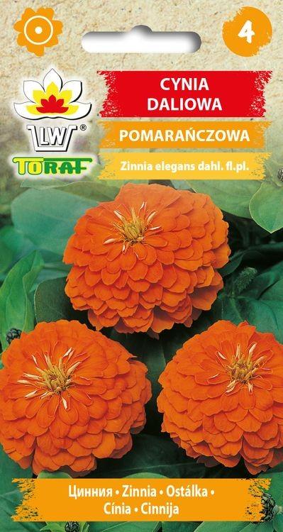 cynia-pomaranczowa