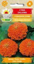 Cynia daliowa pomarańczowa1