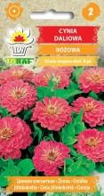 Cynia daliowa różowa