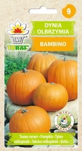 dynia bambino-LW-76-16-rola
