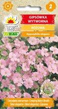 Gipsówka wytworna Różowa