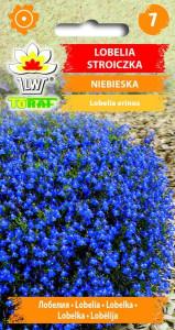 Lobelia stroiczka niebieska