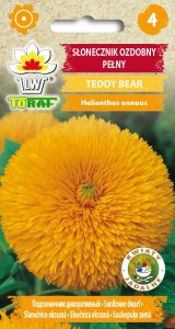 Słonecznik ozdobny pełny Teddy Bear