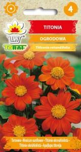 Titonia ogrodowa pomarańczowa