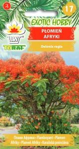 Plomien-Afryki-1