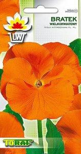 Bratek wielkokwiatowy pomarańczowy