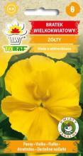 Bratek wielkokwiatowy żółty