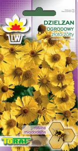 Dzielżan ogrodowy złotożółty - roślina miododajna