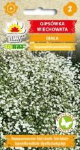 Gipsówka wiechowata - biała