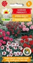 Goździk pierzasty - Spring Beauty