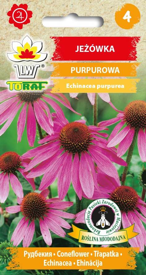 Jezowka-PURPUROWA