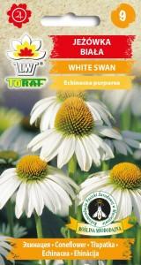 Jeżówka White Swan - biała