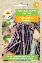 Fasola szparagowa karłowa Purple Teepee