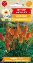 Trytoma groniasta - żółto-pomarańczowa