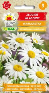 Złocień właściwy Margaretka biały