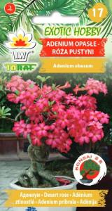 Adenium opasłe - Róża pustyni
